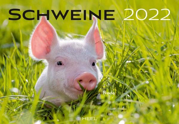 Schweine Monatskalender 2022